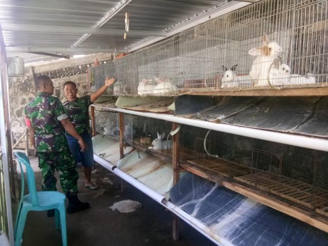 KodimKaranganyar – Babinsa Pantau Langsung Peternak Kelinci di Wilayah Binaan