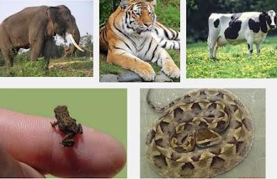 Beberapa Jenis Hewan