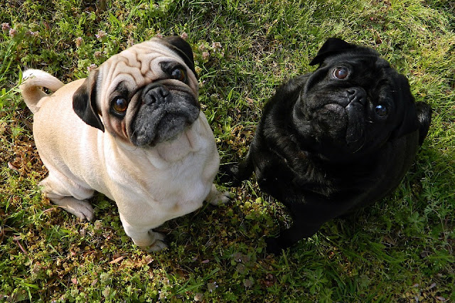 13 Best Dog Breeds For Single People