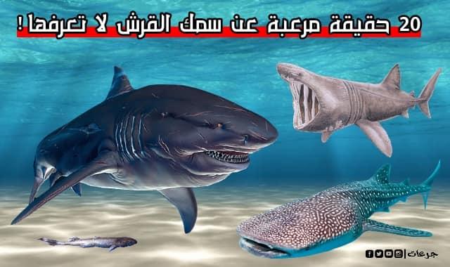 سمك القرش 20 حقيقة مرعبة حول هذا المخلوق المفترس