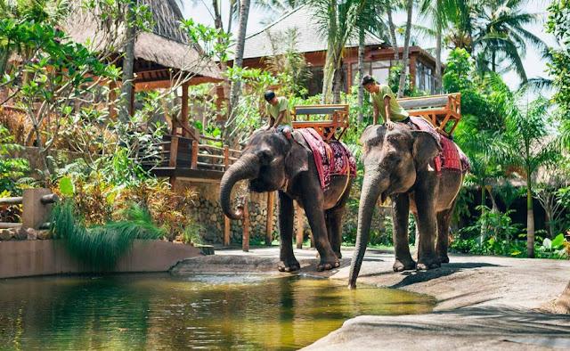 Ticket Masuk Lombok Elephant Park