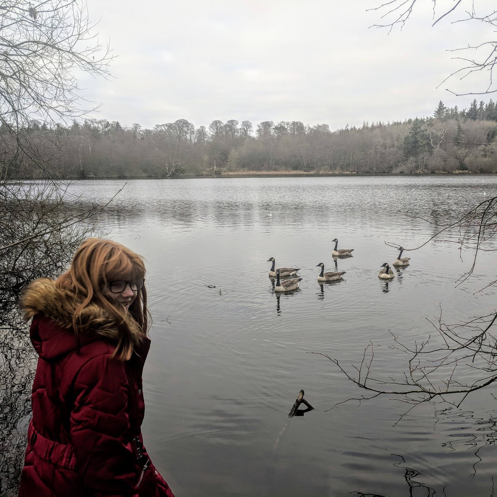 A Guide to Visiting Bolam Lake, Northumberland  - feeding geese from jetty