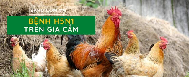 Bệnh H5N1 là gì?