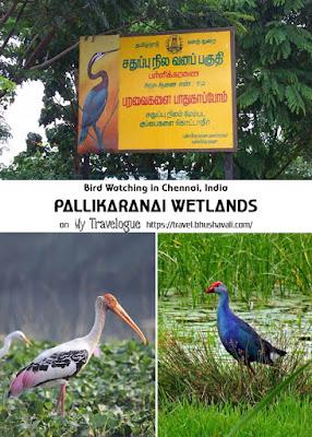 Pallikaranai Wetland Marsh Bird Watching Chennai