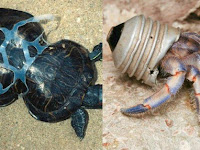 Alasan Mengapa Plastik Berbahaya Bagi Kehidupan Makhluk Hidup