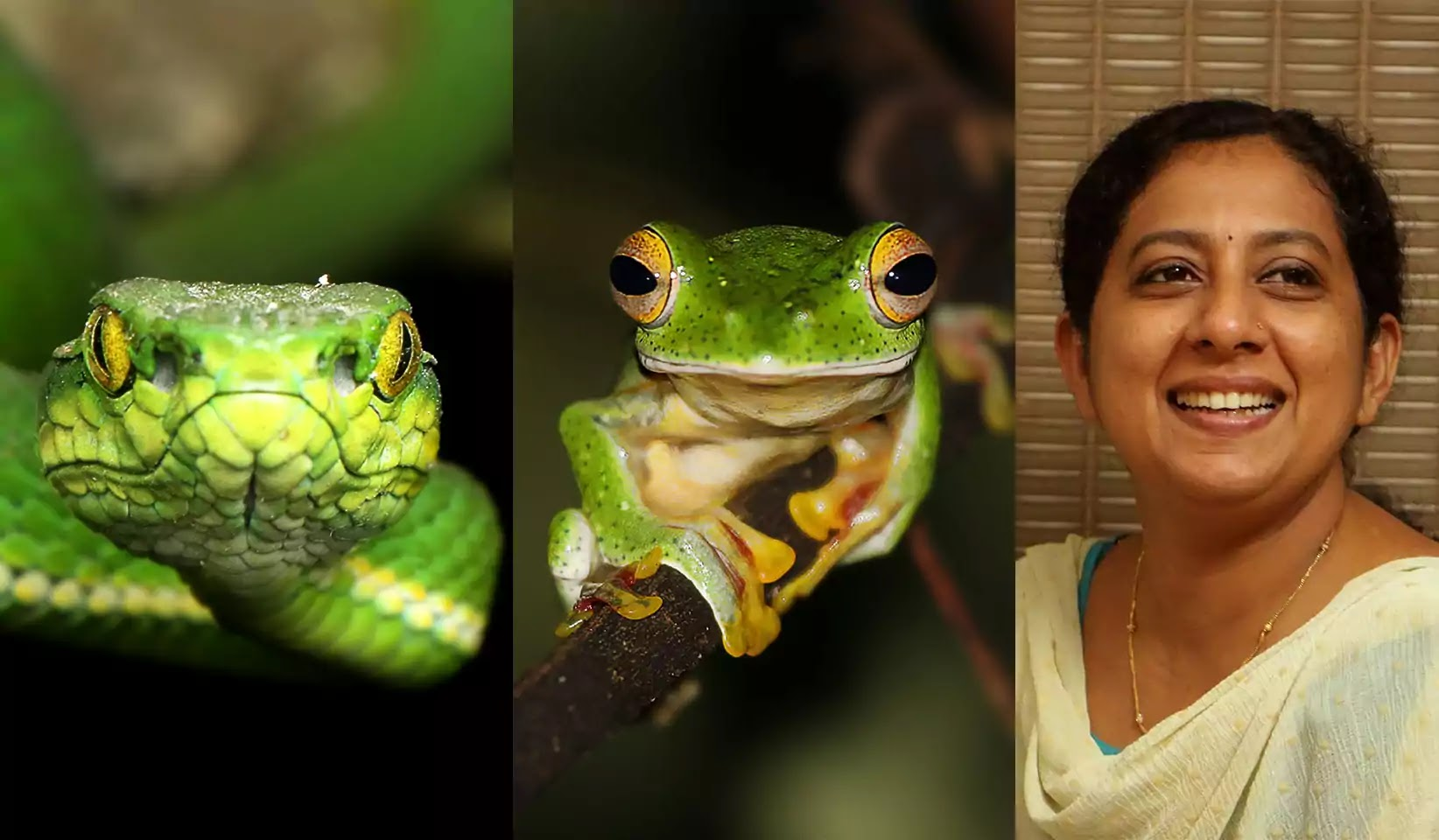 Green snake, frog, Shalini binnu