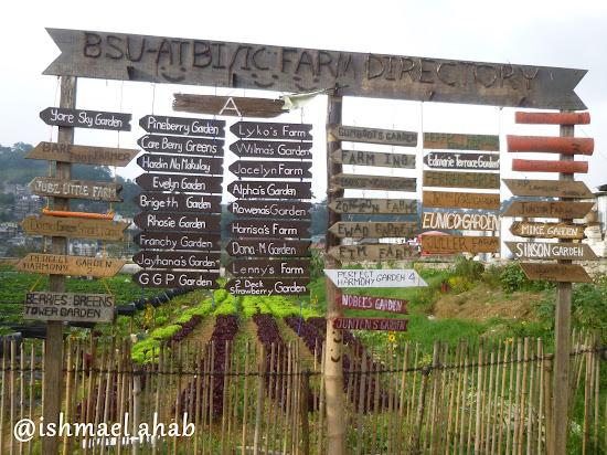 Farm Directory at Strawberry Farm in La Trinidad, Benguet