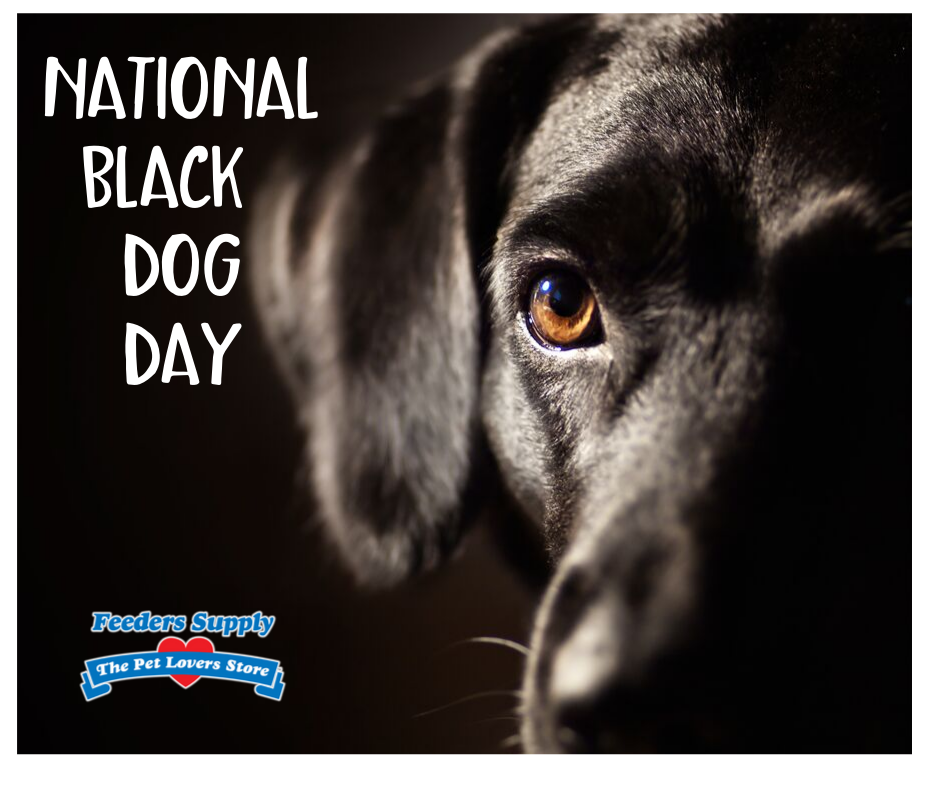 National Black Dog Day Wishes Pics