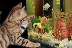 Cara Mengganti Kaca Aquarium yang Pecah dengan Cepat