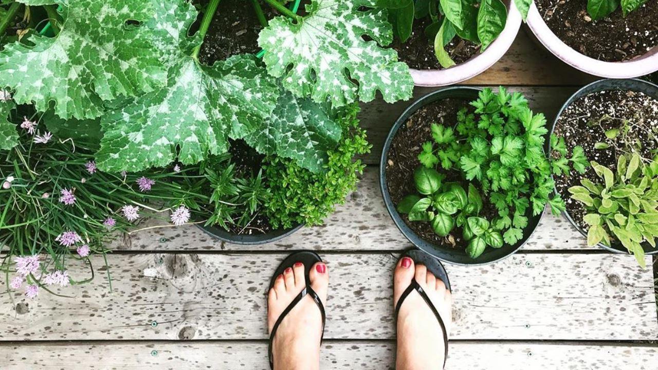 17 Gemüse, das in einem Topf wachsen kann