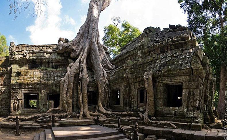 Los árboles gigantes en el templo Ta Prohm | Camboya