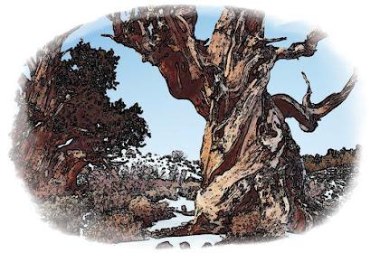 Pohon Tua dan Roh Corona   Cerpen Sus Woyo