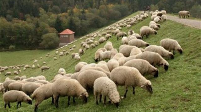 Σύνδεσμος Ελληνικής Κτηνοτροφίας: Οι ενισχύσεις να πάνε σε αυτούς που παράγουν