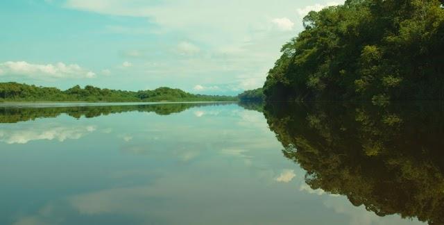 """JBS anuncia programa """"Juntos pela Amazônia"""""""