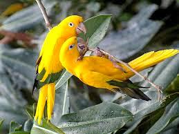 cute Animal photo, Beautiful Wild Animal, Cute Birds Photo, Lovely Animal Photo
