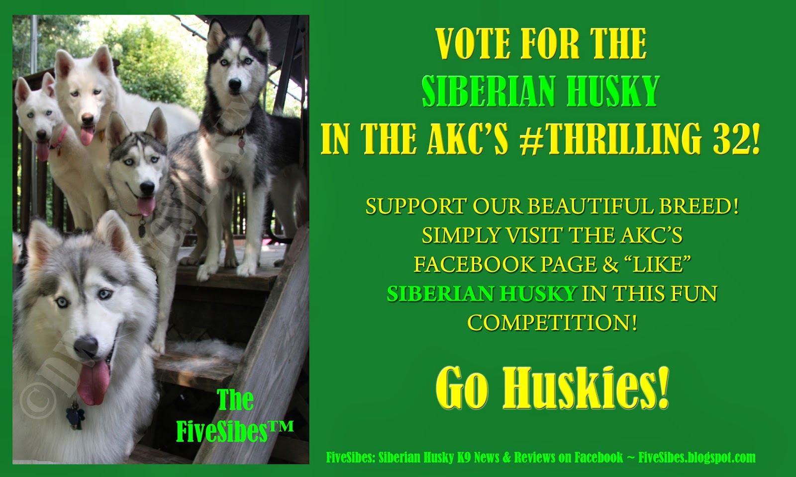 Fivesibes Vote Siberian Husky Today In Akc Thrilling32 Fun Breed