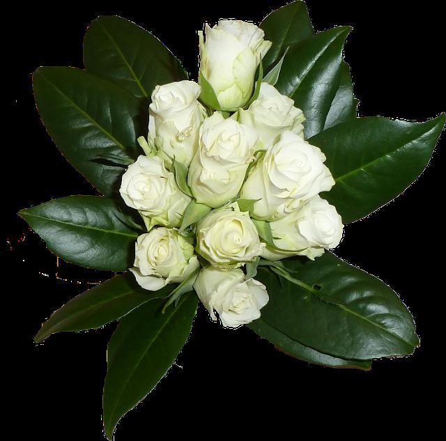 white-roses-photos