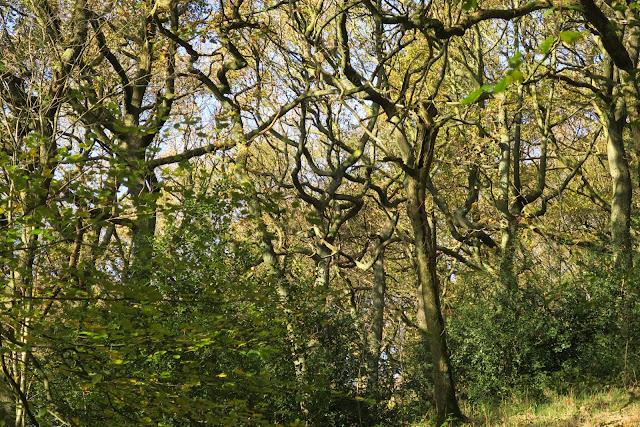 Twisted Trees at Jerusalem Farm, West Yorkshire
