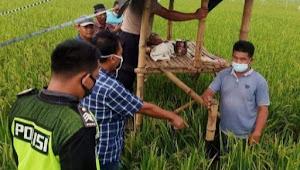 Seorang Petani Tewas Tersambar Petir