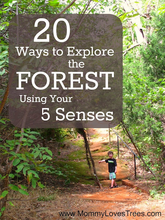20 Ways to Explore the Forest Using Your 5 Senses