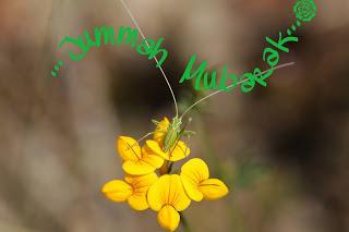 جمعة مباركة, friday jummah messages