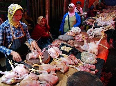 Harga Ayam Potong Hari Ini
