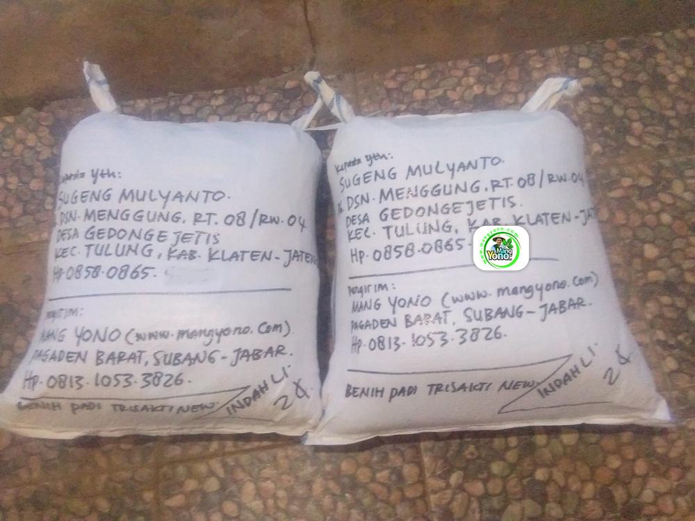 Benih Pesanan SUGENG Klaten, Jateng. (Setelah packing)