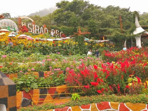 100% Must Visit: The Beautiful Place of Sirao Garden in Busay Cebu City