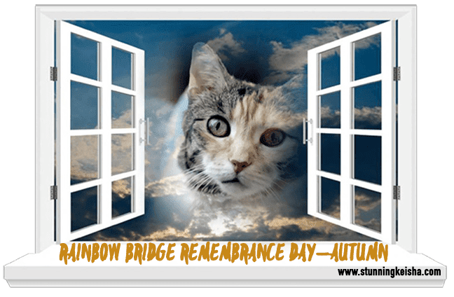 Rainbow Bridge Remembrance Day—Autumn