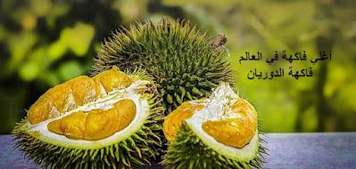 أغلي فاكهة في العالم فاكهة الدوريان