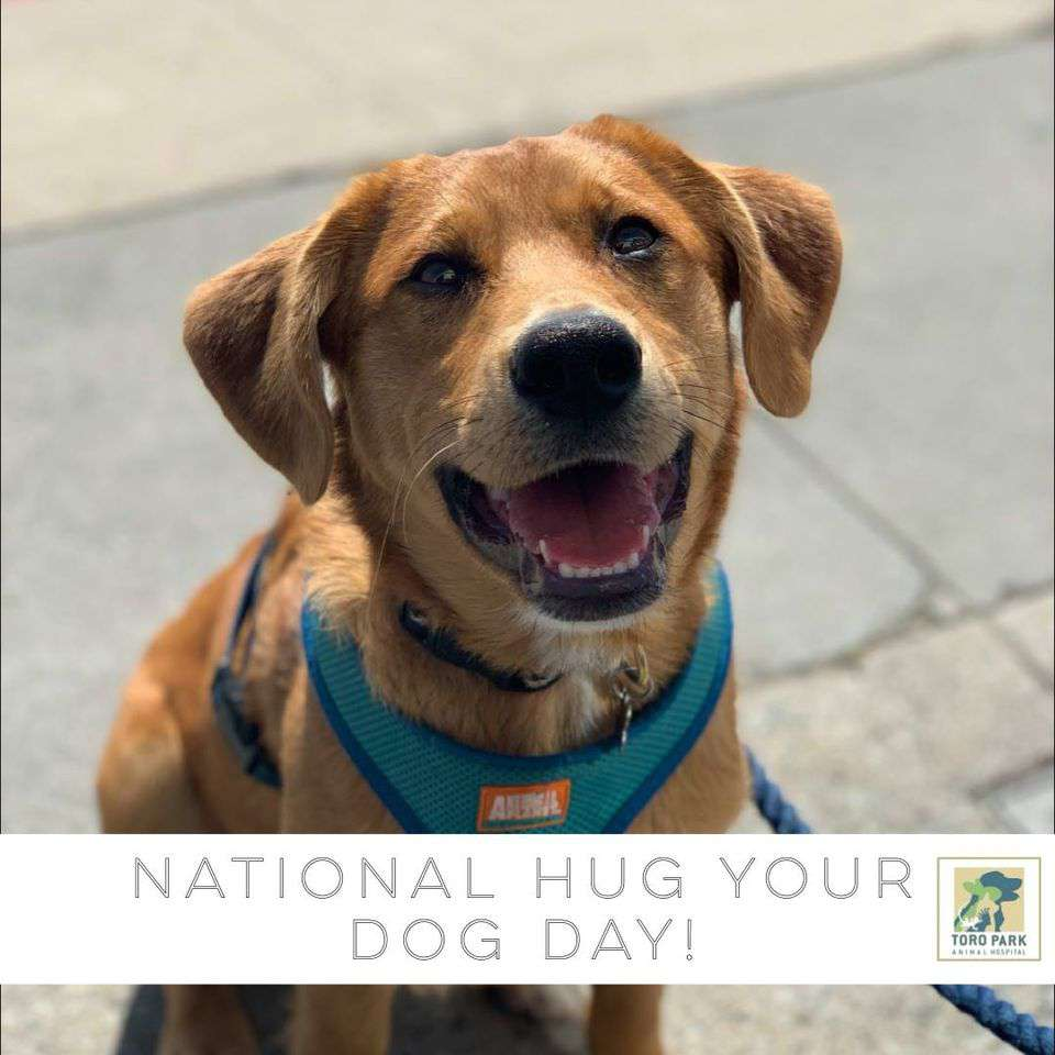 National Hug Your Dog Day Wishes
