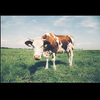 Mother Dairy Franchise | Mother Dairy Franchise In Hindi (Cost, Profit And More)