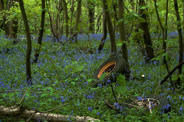 wheels amongst the bluebells