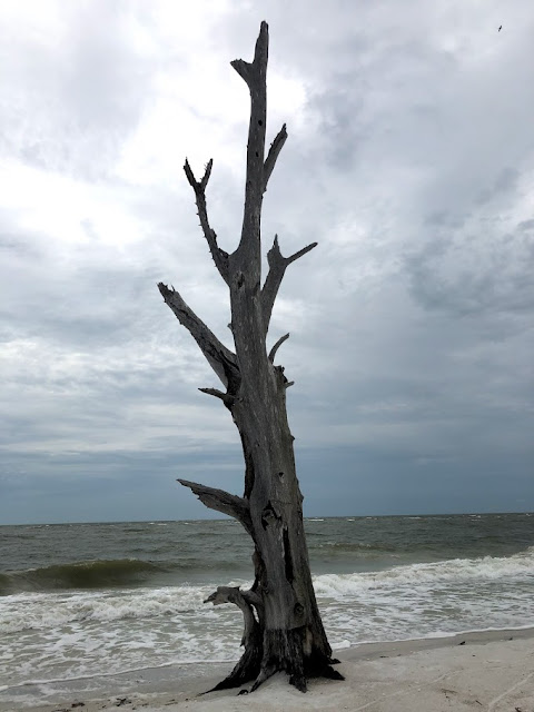 Dead Tree on Lovers Key State Park Beach