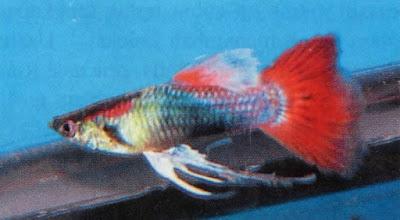 Red neon tuxedo ribbon