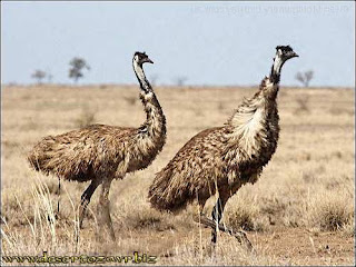 Птицы пустыни названия