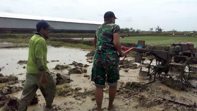 Kejar Masa Tanam, Babinsa Desa Tangkis Bantu Petani Olah Lahan Pertanian