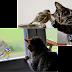 Mèo Mướp và Chim Sẻ