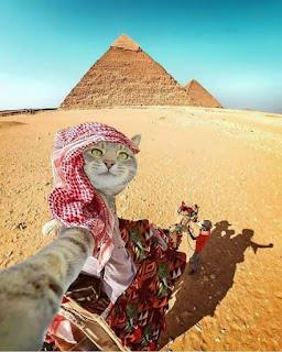 Kim demiş kediler selıfi çekemez?  Kedilerin sevimli olduğunu her kes  bilir. Peki onların selfi çeke bildiklerini biliyormuydunuz? bilmiyorsanız aşağı bakın