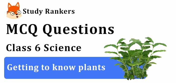MCQ Questions for Class 6 Science: Ch 7 Getting to know plants