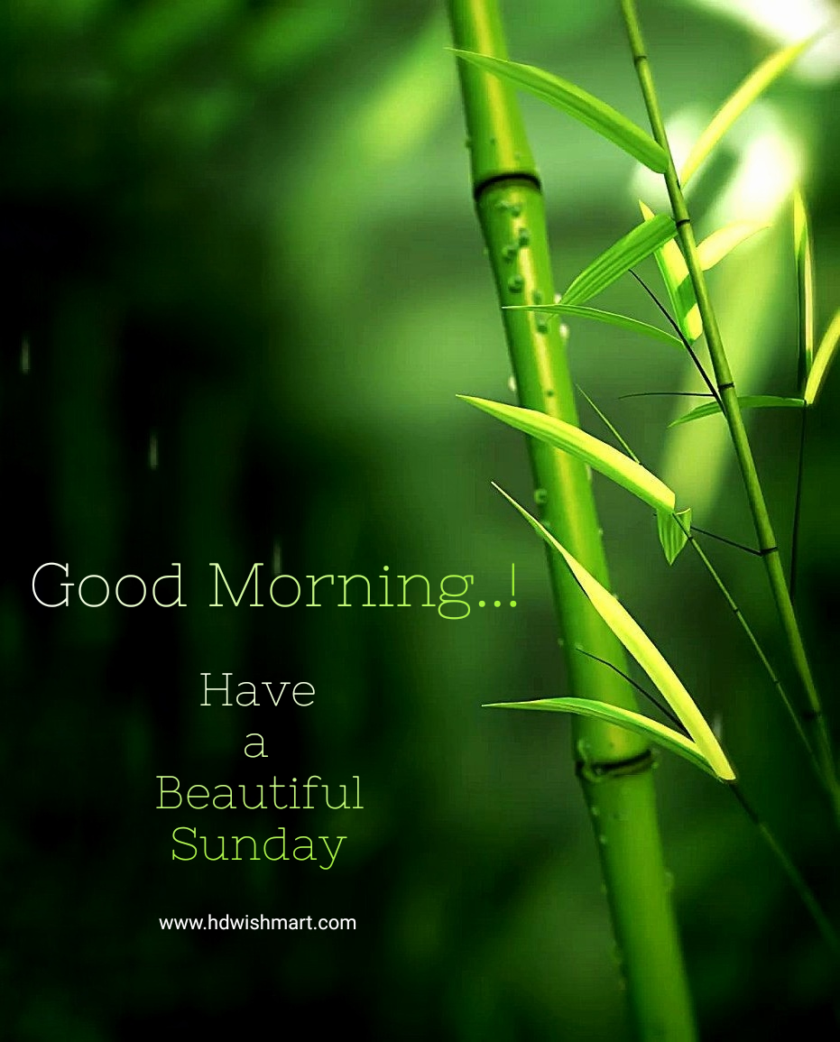 20 Best Happy Sunday Wishes Images, Greetings, Photos, and Quotes ...