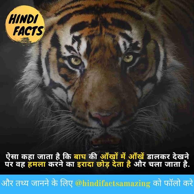 Tiger In Hindi - बाघ के बारे में 70 रोचक तथ्य
