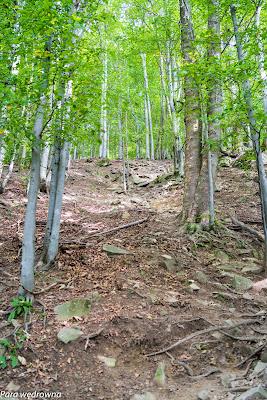 Najtrudniejszy odcinek, stromo i kamieniście