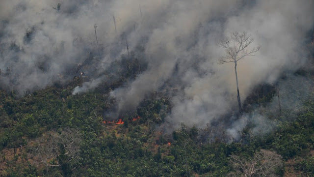 Βοδινό κρέας και σόγια «καταστρέφουν» τον Αμαζόνιο