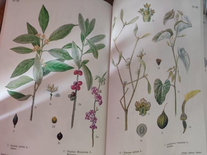 Quando raccogliere le piante officinali?