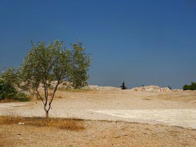 Μοναχικό δέντρο στον λόφο του Φιλοπάππου στην Αθήνα