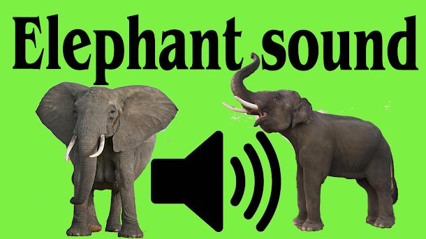 Elephant sound effect no copyright