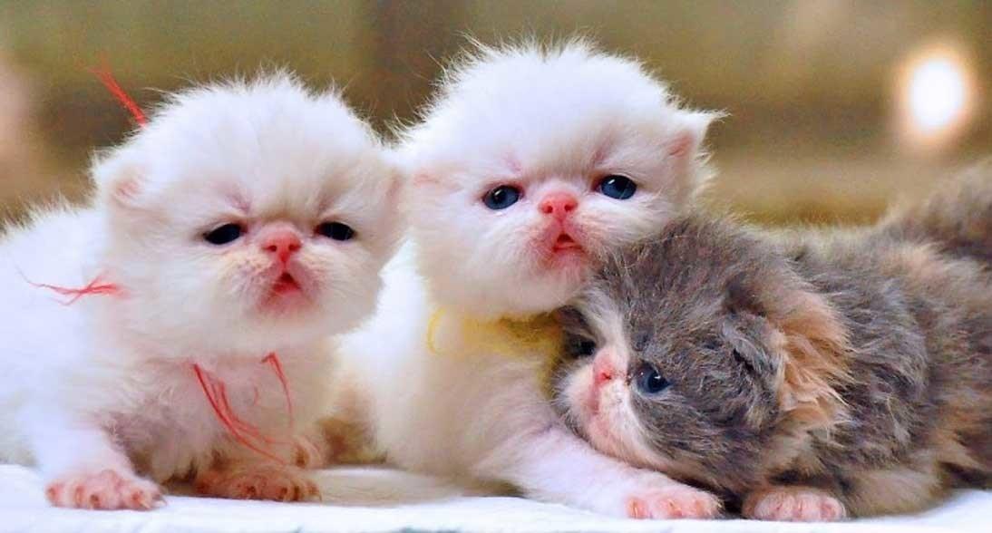 7 Panduan Cara Merawat Anak Kucing Dengan Atau Tanpa Indukan
