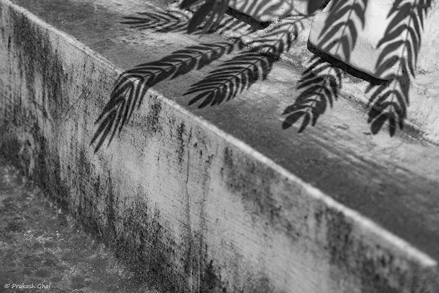 A Black and White Minimalist Photograph of Shadow of Leaves falling a Textured Indian Wall.