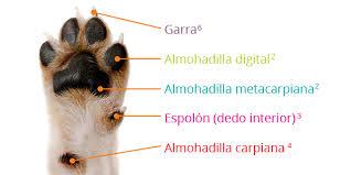 Consejos para las patas de tu perro